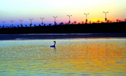 2015三门峡黄河湿地马拉松赛
