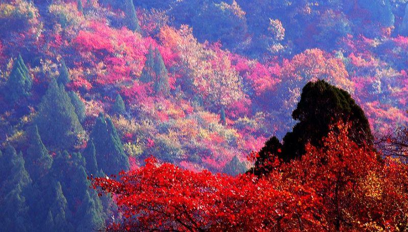 绿跑阳光第五期9.9暗夜行动双人夜爬香山