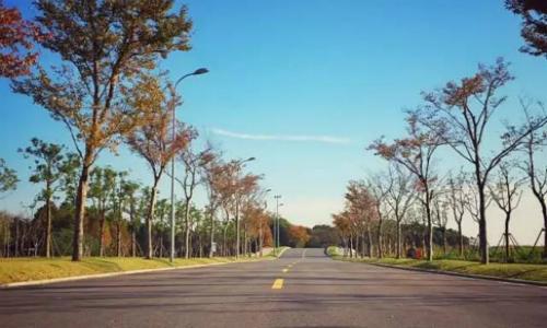 上海闵大荒国际半程马拉松精英赛